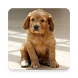 Puppy Wallpapers - Cute Puppies Wallpapers by New Trends Apps