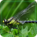 Dragonflies HD 2016 LWP by Free Live Wallpaper Lab