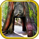 Escape Game Deserted Island by Escape Game Studio