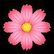 Flower Wallpapers by Saudagran Tech