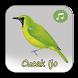 Burung Cucak Ijo Fighter