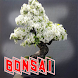 Bonsai idea Ornamental Plants by seemala