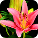 Colored Flowers Live Wallpaper by Lucas Wallpapers