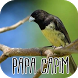 Canto do Papa Capim New by Mediaku Apps