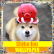 Shiba Inu Dog Wallpaper by Tirtayasa Wallpaper