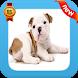 Funny Bulldog PF by Yolann