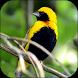 Birds 3D Video Live Wallpaper by LuckyEdit