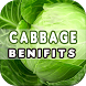 Cabbage Benefits by Health Info