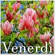 Venerdì by fheihet apps