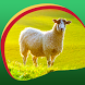 Sheep Live Wallpapers by Creativ Live Wallpapers