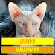Sphynx Cat Wallpaper by Tirtayasa Wallpaper