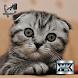 Кошки by МобКиоск1