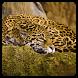 Jaguar brain storm by Sergey Vasunenkov