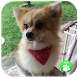 Dog Breeds Quiz by Yuyu School