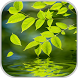 Nature Live Wallpaper by STECHSOLUTIONS