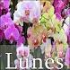 Lunes by Bekl line App