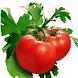 La Dieta Del Tomate by Luis Ayala