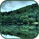 HD Forest Live Wallpaper by Forever WallPapers