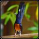 Kicau-Kicau Murai Batu Juara Nasional by Jehova app