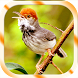 Kicau Burung Prenjak by Jayakerta Bizz