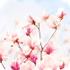 Magnolia Flower Live Wallpaper by DynamicArt Creator