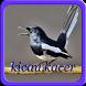 Kicau Burung Kacer NEW by Yayane Apps