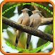 Suara Burung Perkutut Offline by Pram App