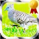 Masteran Burung Perkutut by Jayakerta Bizz