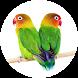Suara Burung Lovebird Offline by Suismanking Dev
