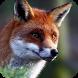 Cute Fox Live Wallpaper by WallpapersLove