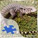 Tegus Jigsaw Puzzles by yojigsaw.com