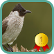 Sooty-headed Bulbul by Asfa Labs