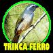 canto trinca ferro new by perimusicadev