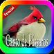 Canto De Passaros Brazil by perimusicadev