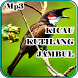 Kicau Kutilang Jambul Mp3 by iky94 studio
