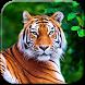Tiger Live Wallpaper by Jango LWP Studio
