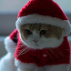 santa claus cat live wallpaper by motion interactive