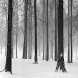 Snowy Forest Live Wallpaper by AlamoApps