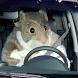 HLYCHI (Rat Drift)
