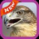 Hawk Wallpaper by lucas17