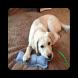 DIY Dog Toys Ideas