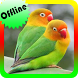 Kicau Lovebird Super Ngekek Offline