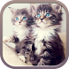 Kitten Wallpapers by Beauty Labs