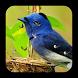 J7 HD Birds Live Wallpaper by Creative LiveWallpaper