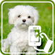 Photos of Puppies by Addictive Free Apps