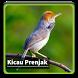 Kicau Suara Burung Prenjak by kangdeveloperstudio