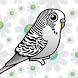 طائر البادجي - Budgie Birds