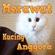 Kenali Cara Merawat Kucing Anggora Kesayangan Anda by Den apps