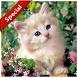 suara kucing terbaru by perimusicadev