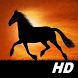 horse wallpapers HD free by funnylab